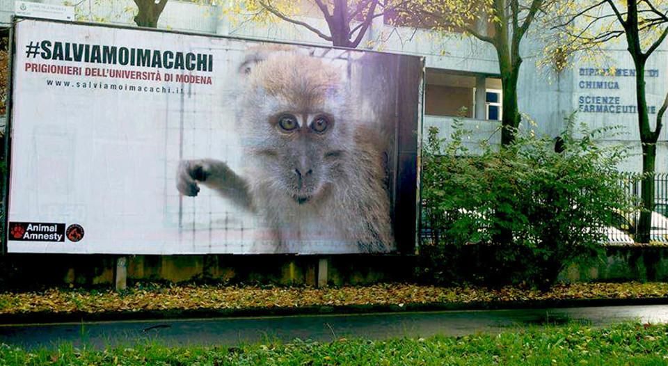 Il manifesto davanti all' Università di Modena, nel novembre scorso