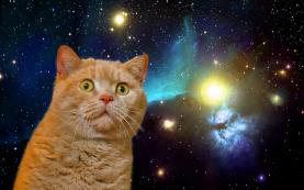 spacecat2