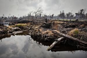 Gli incendi servono a permettere la conversione delle foreste in piantagioni di palma da olio. Qui, area torbigena recentemente deforestata vicino al villaggio di Tanjung Baru, Indonesia.