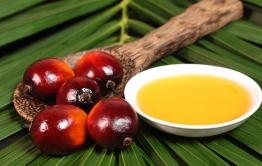 Bacche rosse dalle quali si estrae l'olio di palma