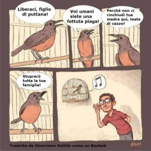 Uccello incazzato