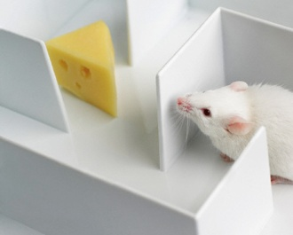 Mouse in a maze --- Image by © Tetra Images/Corbis